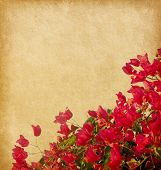 Red  bougainvillea against a background of old paper