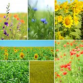 Collage of beautiful fields