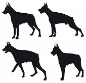 Doberman four different black silhouettes