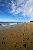 Footstep Musk Pond  Coastline And Summer