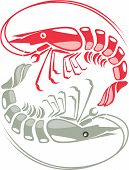 Shrimp vector red raw