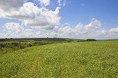 Scenic Pea Fields