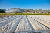 Vegetable garden with various edible plants in Kyoto district,  Japan.