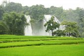 Ban Gioc Waterfall and rice fields in Vietnam