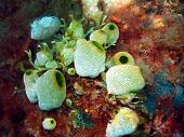 image of squirting  - The surprising underwater world of the Bali basin - JPG
