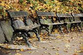 Wooden benches at park in autumn time