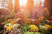 Beautiful plants and flowers on display at sunset