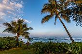 Palm Trees Along The Coast