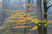 Colorful Trees In Autumn Forest