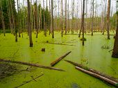 Green swamp in the forest