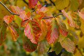 Stunning autumn leaves