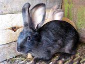 Small Nice Rabbits