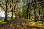 foto of ferrara  - The Walls of Ferrara during autumn with fallen leaves on the ground - JPG