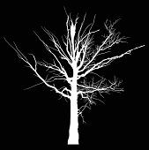 illustration with white dry large tree silhouette isolated on black background