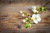 Spring blossom on old wooden table