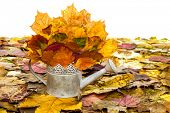 watering can with autumn leaves isolated on white