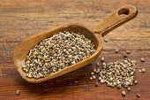 hemp seeds on a rustic wooden scoop against grunge wood table