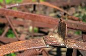 Fragment Of An Old Farm Equipment. Background.