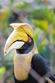 Hornbills In Wire Fence In Public Park, Tailand