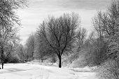 Black and white winter photo