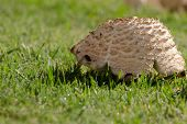 pic of fairy-mushroom  - Side lit morning mushroom on dew filled grass - JPG