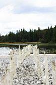 old bridge poles 5