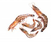 picture of white-tiger  - Raw tiger shrimps on white - JPG