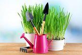 pic of bucket  - Fresh green grass in small metal buckets - JPG