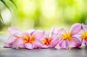 picture of frangipani  - Tropical Frangipani on wooden table for spa and wellness concept - JPG
