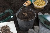 image of household farm  - seeds and gardening tools ready for gardening - JPG