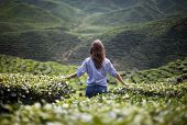 stock photo of cameron highland  - lonely girl in mountains girl in the mountains in a blue shirt - JPG