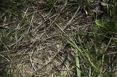 picture of snake-head  - Dangerous snake hiding in grass that not anyone will notice - JPG