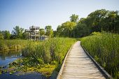 pic of board-walk  - Wooden board walk and lookout on Pelee point conservation area - JPG