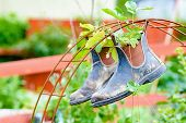picture of strawberry plant  - Recycle or up cycle in the garden - JPG