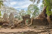 stock photo of raider  - Ta Prohm famouse giant tree with ancient roots - JPG