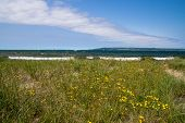 picture of wildflower  - Wildflowers dot the coastal habitat of the Lake Superior shore in Michigan - JPG