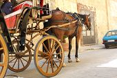 Horse, Carriage and Car
