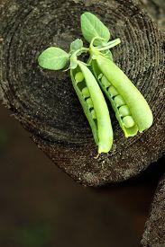 foto of pea  - open green peas on old wood - JPG