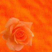 Orange Background With A Rose