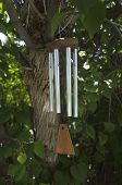 stock photo of windchime  - Windchimes hang from a branch of a lilac tree - JPG