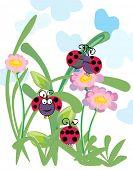 ladybugs having fun