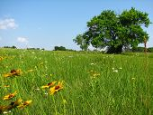 Kansas Wildflower Field