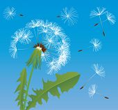 Raster version of vector image of dandelion (contain the Clipping Path of all objects)