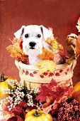stock photo of grateful dead  - fall and thanksgiving items - JPG