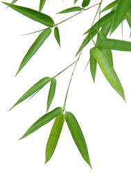 foto of bamboo leaves  - Bamboo leaves isolated over a white background - JPG