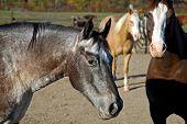 Horse 13