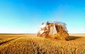 Grain Harvesting Grain Harvesting Combine. Combine Harvester On A Wheat Field With Blue Sky. poster