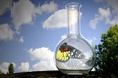 Butterfly In A Flask
