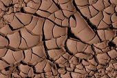 Cracked Dried Mud