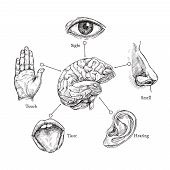 Five Human Senses. Sketch Mouth And Eye, Nose And Ear, Hand And Brain. Doodle Body Part Vector Set.  poster